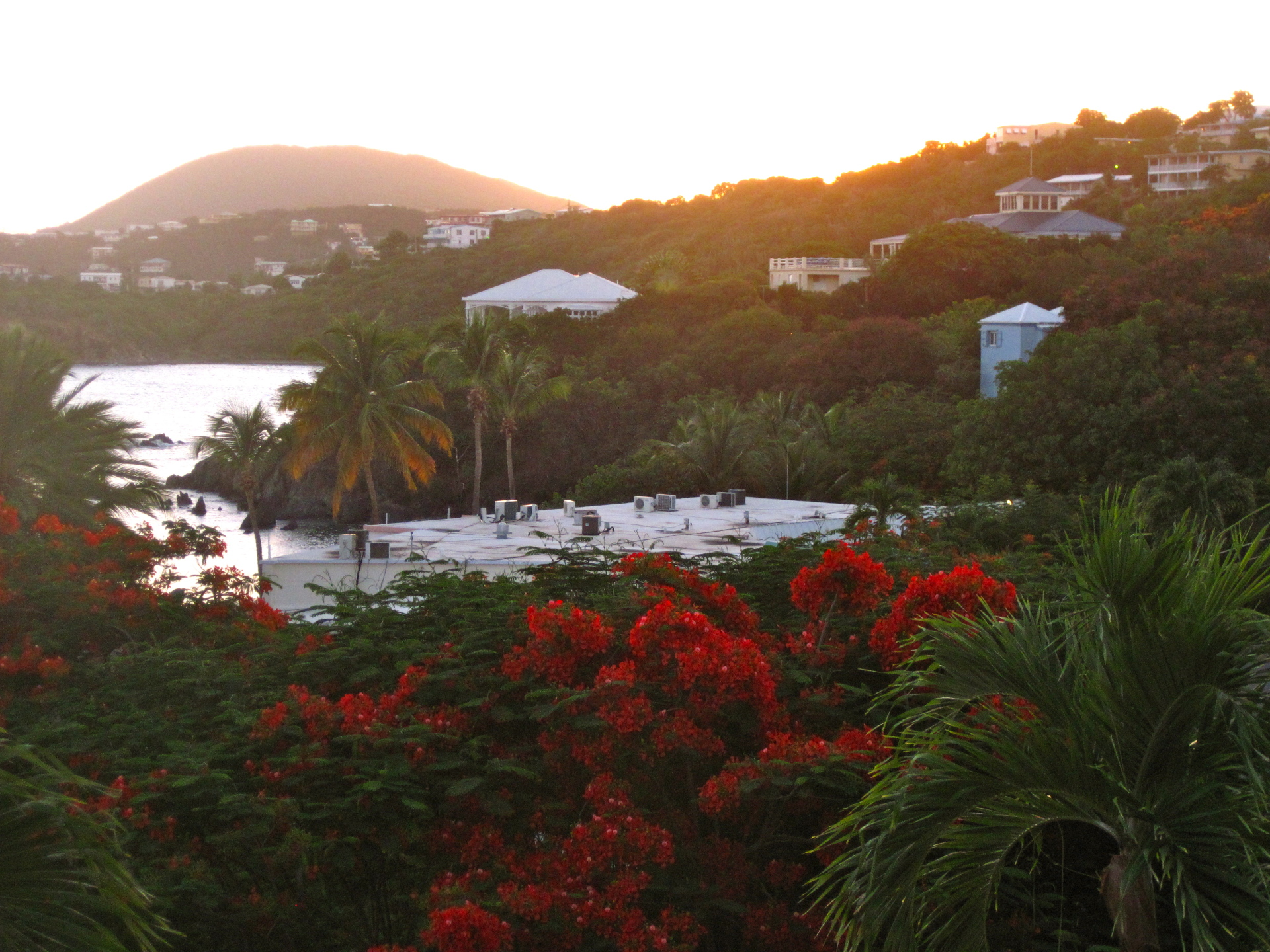 red, flowers, mountain, islands, bahamas, st.John